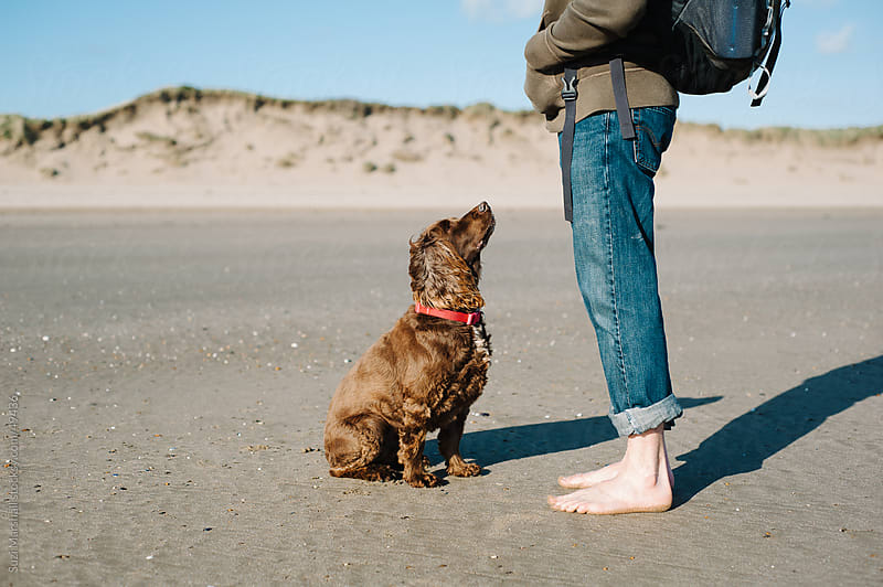 Dog sitting and looking up at man who is barefoot on a beach by Suzi Marshall for Stocksy United