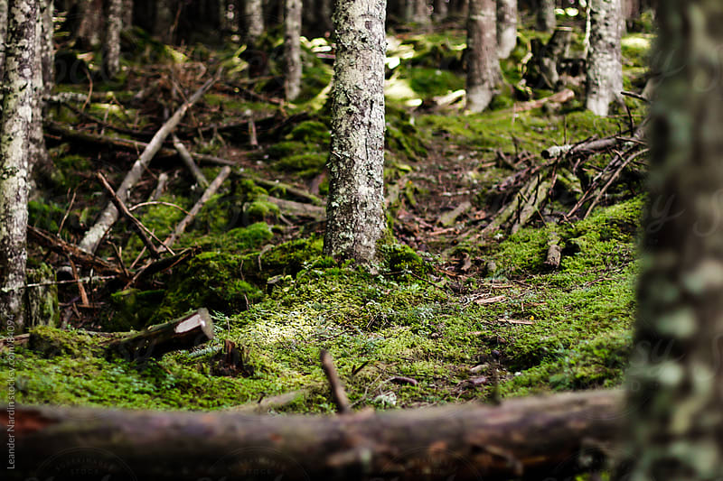trail in a mixed forest by Leander Nardin for Stocksy United