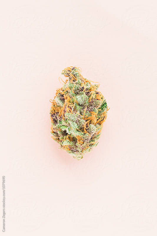 marijuana bud on pastel pink background by Cameron Zegers for Stocksy United