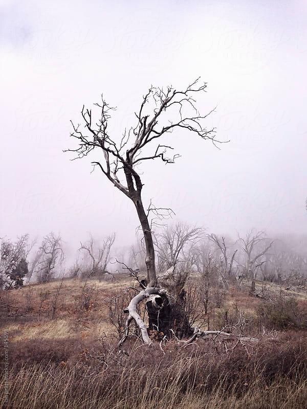 deadtree  by ian pratt for Stocksy United