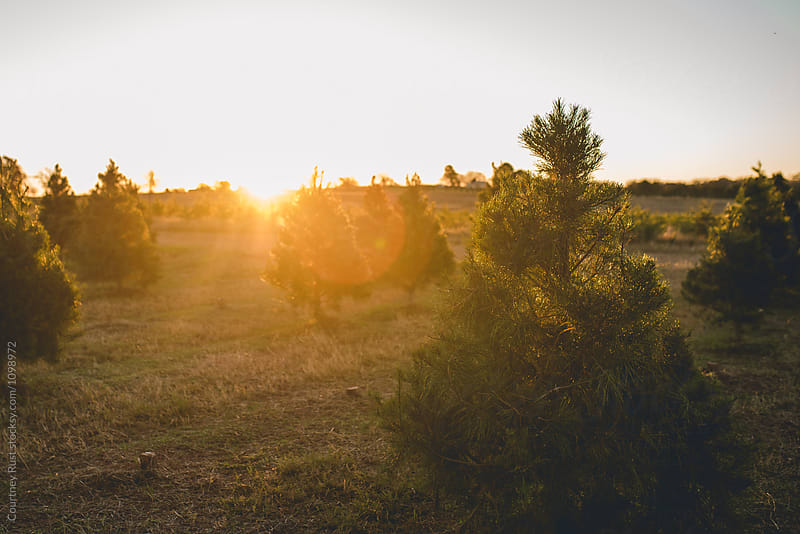 Sunset at the farm by Courtney Rust for Stocksy United