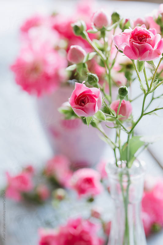 Gentle pink roses by Pixel Stories for Stocksy United