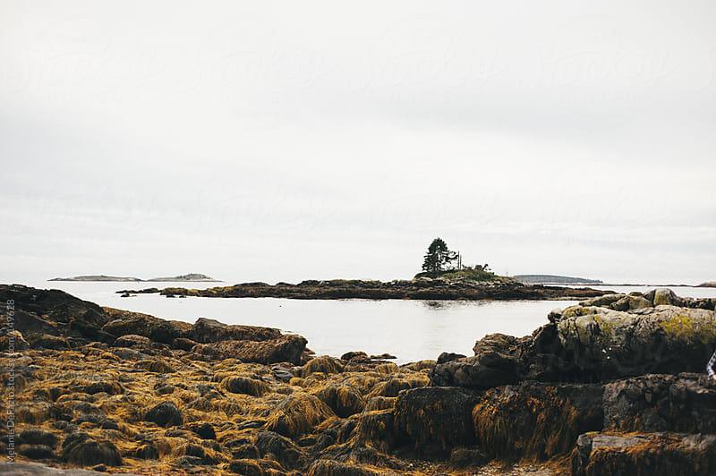 Maine by Melanie DeFazio for Stocksy United