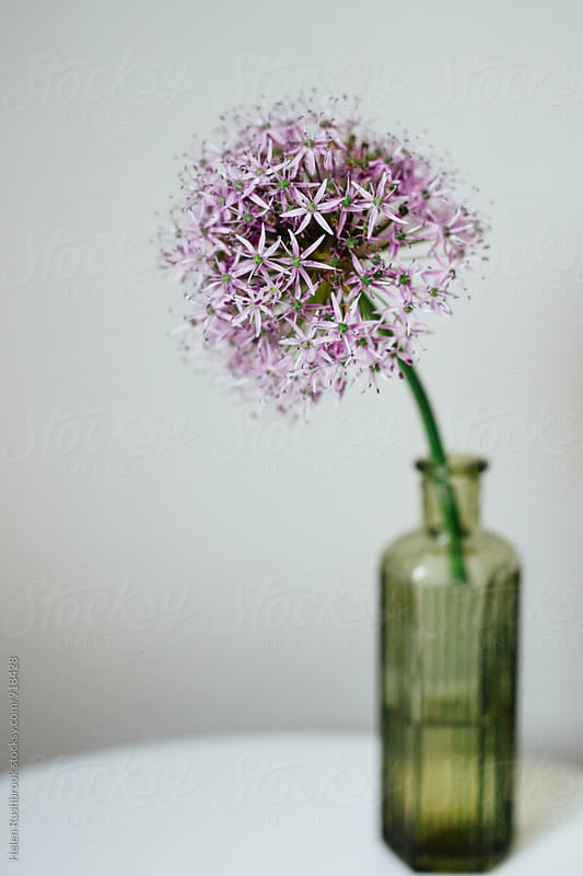 Allium flower in an old bottle by Helen Rushbrook for Stocksy United