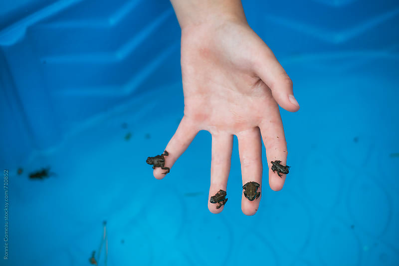 Baby Frogs On Child's Hand by Ronnie Comeau for Stocksy United