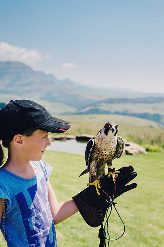 girl with peregrine falcon at a bird park by Gillian Vann for Stocksy United