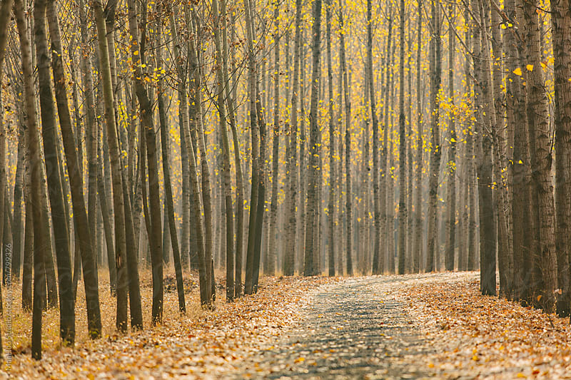 Road in an autumn wood by MaaHoo Studio for Stocksy United