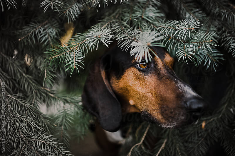 Handsome dog in tree by Isaiah & Taylor Photography for Stocksy United