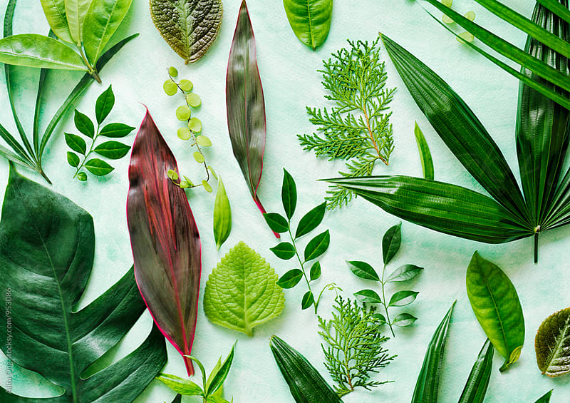 Foliage by Alita Ong for Stocksy United