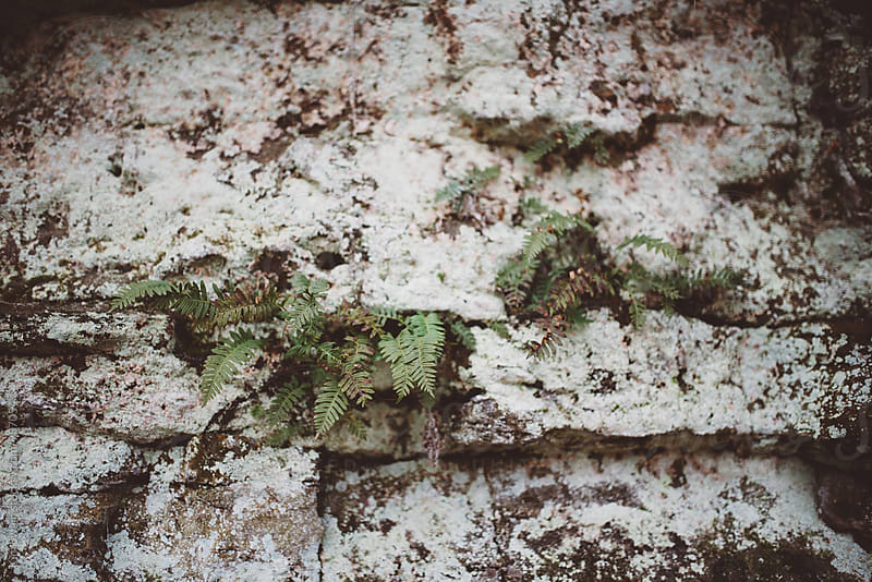 Fern on White Moss Wall by Kim Swain for Stocksy United