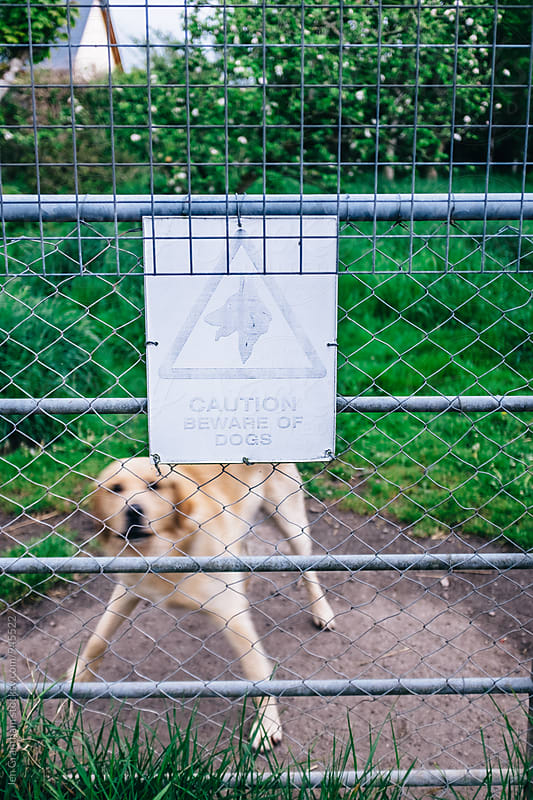 Caution: Beware of Blurry Dogs by Jen Grantham for Stocksy United