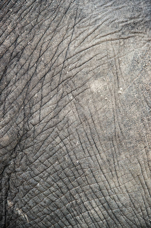 Detail of an elephant skin  by Bisual Studio for Stocksy United