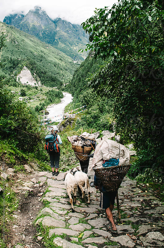 Female trekker, sherpas and goats, Everest Region, Sagarmatha National Park, Nepal. by Thomas Pickard for Stocksy United