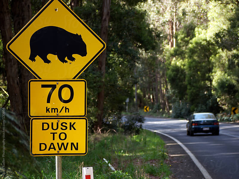 Wombat Sign on an Australian Road by Gary Radler Photography for Stocksy United