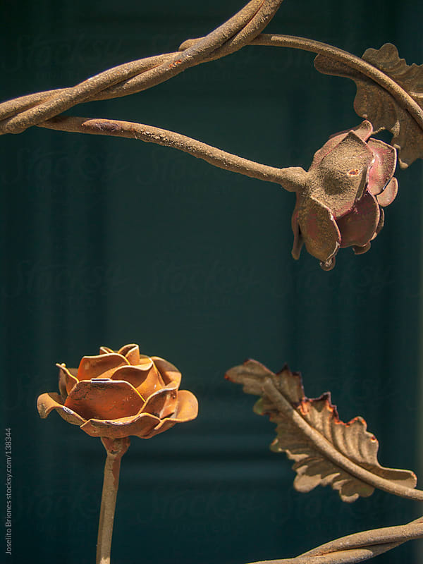 Decorative Detail of Forged Iron Fence in Shape of Roses by Joselito Briones for Stocksy United