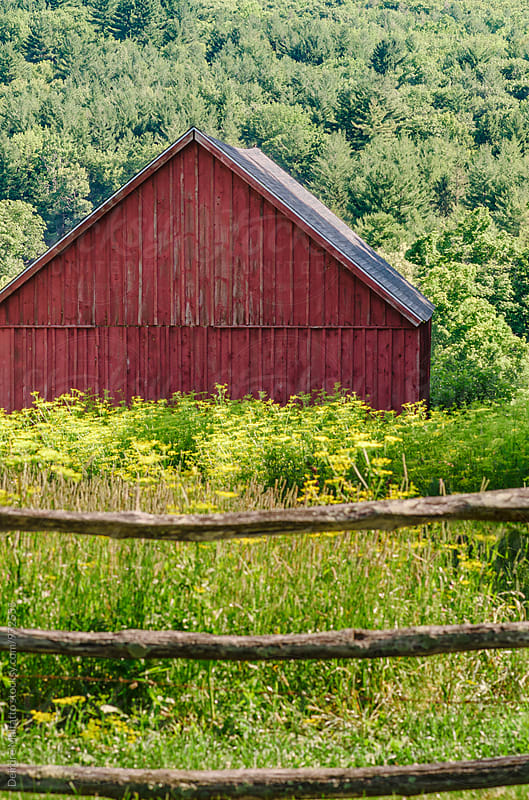 fence, wildflowers, and red barn by Deirdre Malfatto for Stocksy United