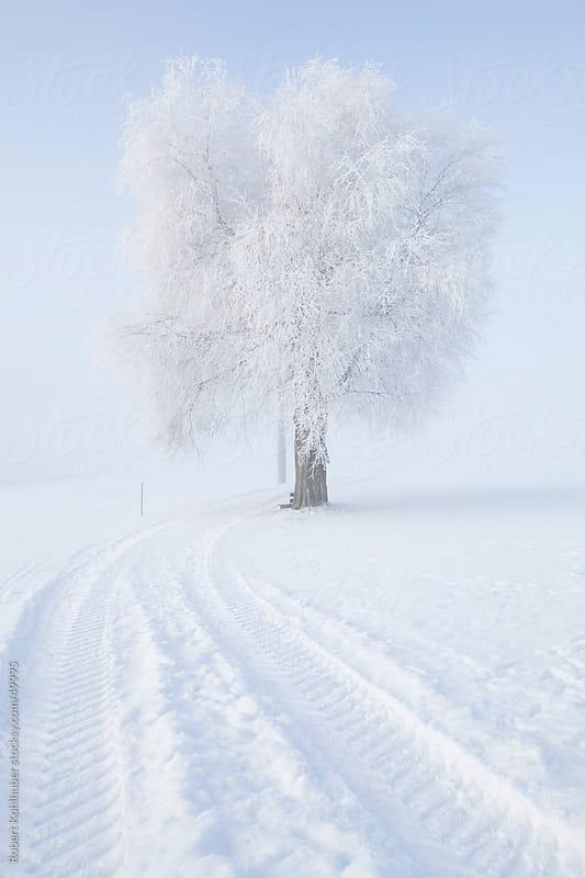 Frozen tree in winter landscape by Robert Kohlhuber for Stocksy United