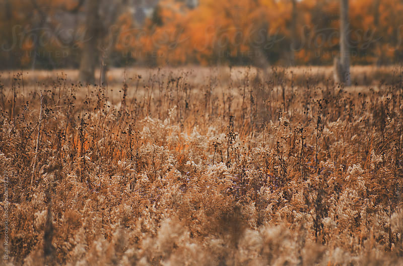 Autumn Colors by Brian Koprowski for Stocksy United