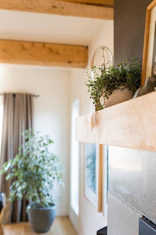 Modern decor on wood shelf by Carey Shaw for Stocksy United