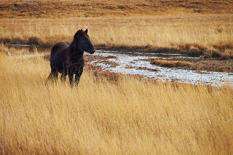 beautiful horse on autumn grassland by Bo Bo for Stocksy United