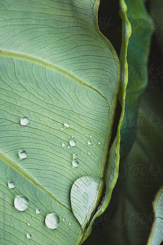bead on the leaves by zheng long for Stocksy United