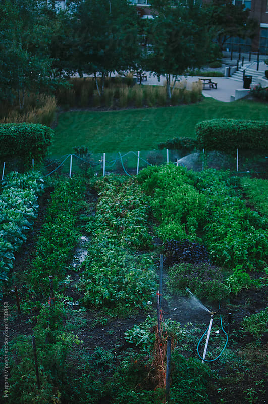 urban garden by Margaret Vincent for Stocksy United