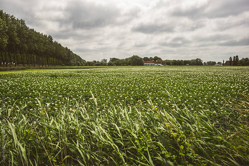 stormy landscape of field by Sam Hurd Photography for Stocksy United