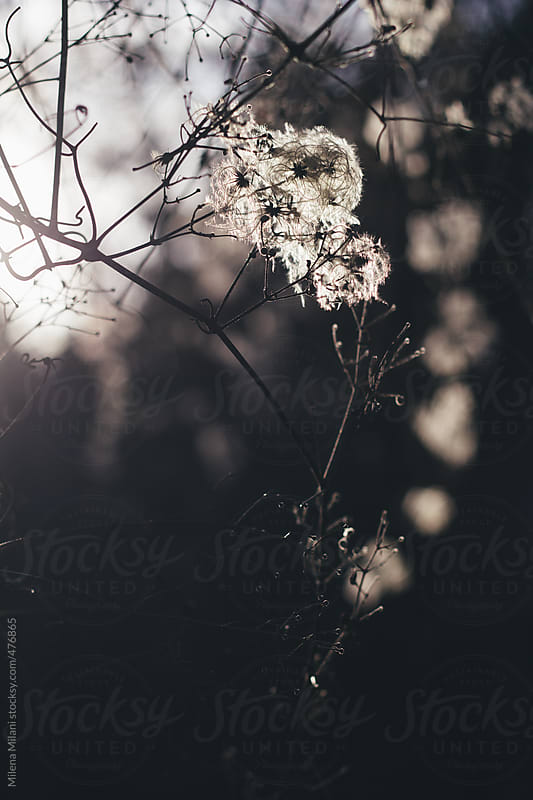 Tree branches in the winter by Milena Milani for Stocksy United