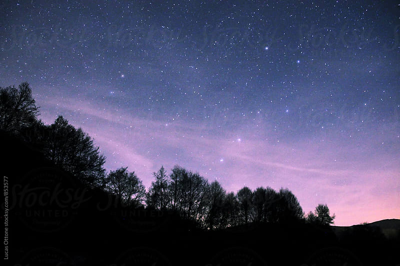 Silhouette of trees with stars in the night sky by Lucas Ottone for Stocksy United