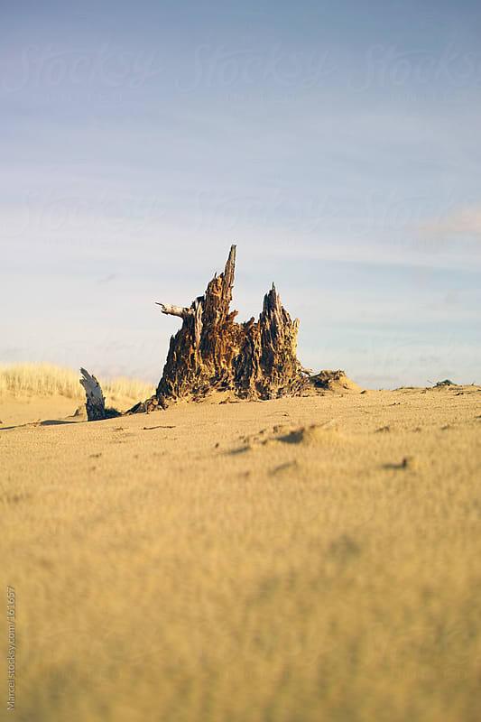 Tree stump in desertlike landscape by Marcel for Stocksy United
