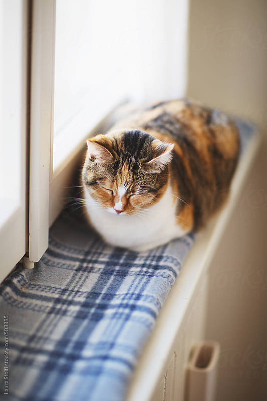 Calico cat sleeping on windowsill close to radiator by Laura Stolfi for Stocksy United