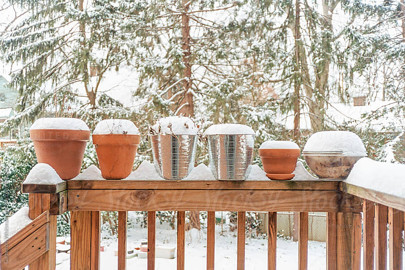 Pot Planters in the snow by Cameron Whitman for Stocksy United