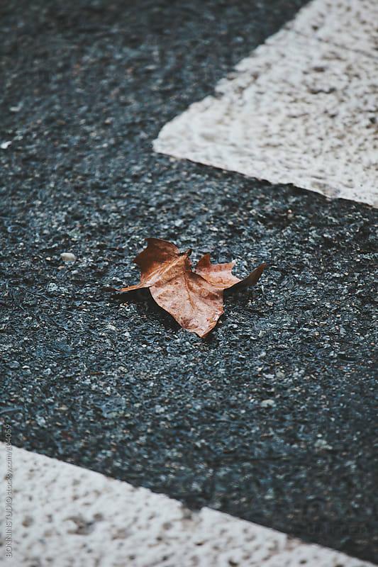 Leaf on crosswalk. Autumn. by BONNINSTUDIO for Stocksy United