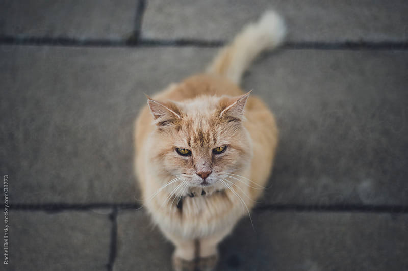 Orange tabby cat looks up from grey sidewalk by Rachel Bellinsky for Stocksy United