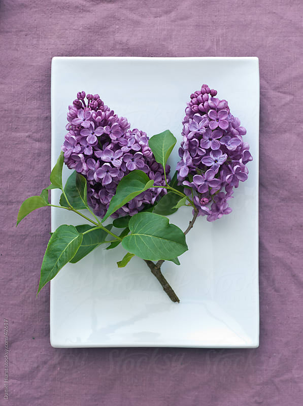 Lilac branch on dish by Daniel Hurst for Stocksy United