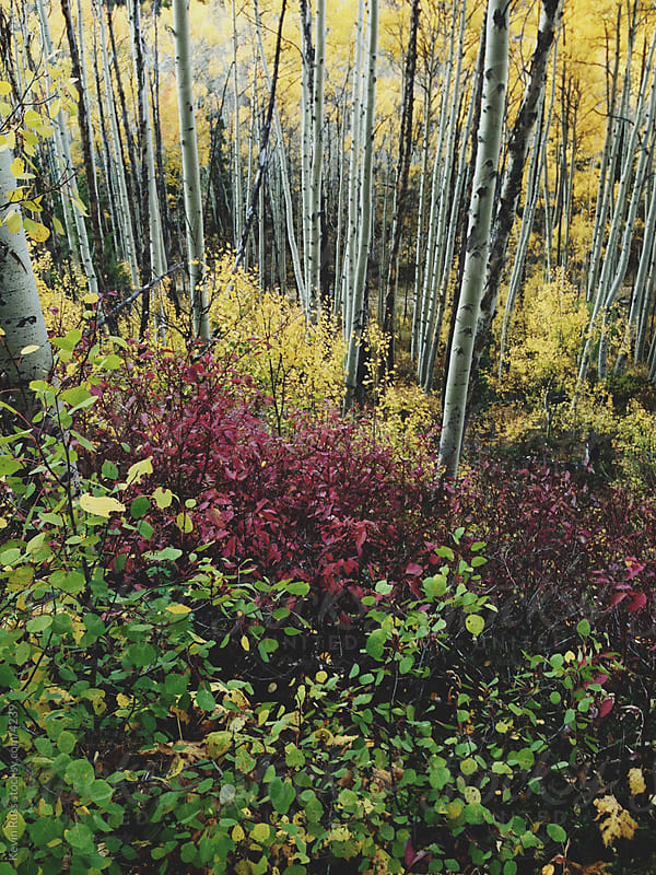 Fall Forest Foliage  by Kevin Russ for Stocksy United