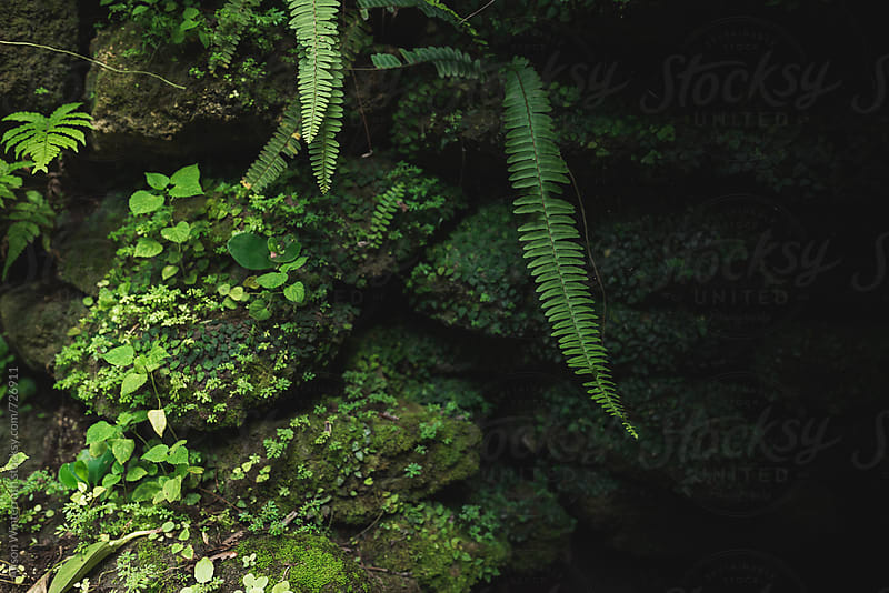 A Rock Wall With Moss And Ferns Growing On Them by Alison Winterroth for Stocksy United