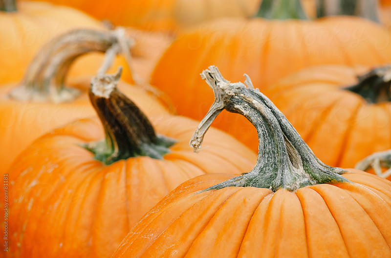 Fresh Pumpkins For Sale by Julie Rideout for Stocksy United