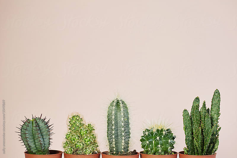 Cactus plants by sally anscombe for Stocksy United