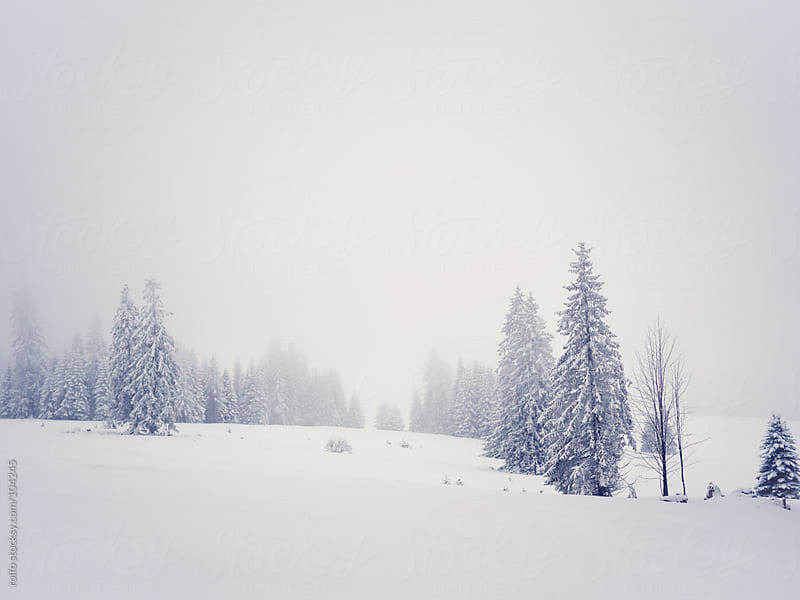 foggy winter landscape by rolfo for Stocksy United
