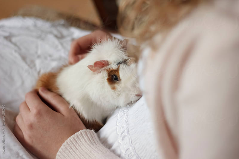 Guinea pig in girl's arms by Jovana Rikalo for Stocksy United