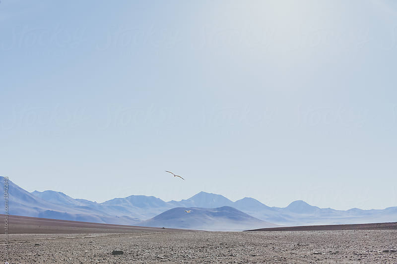 Travelling through the Bolivian Andes by Luke Gram for Stocksy United