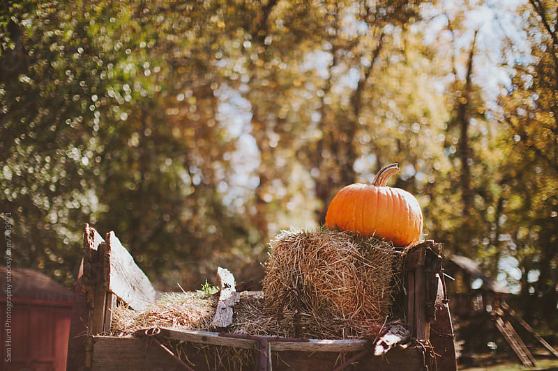 autumn hay ride trailer by Sam Hurd Photography for Stocksy United