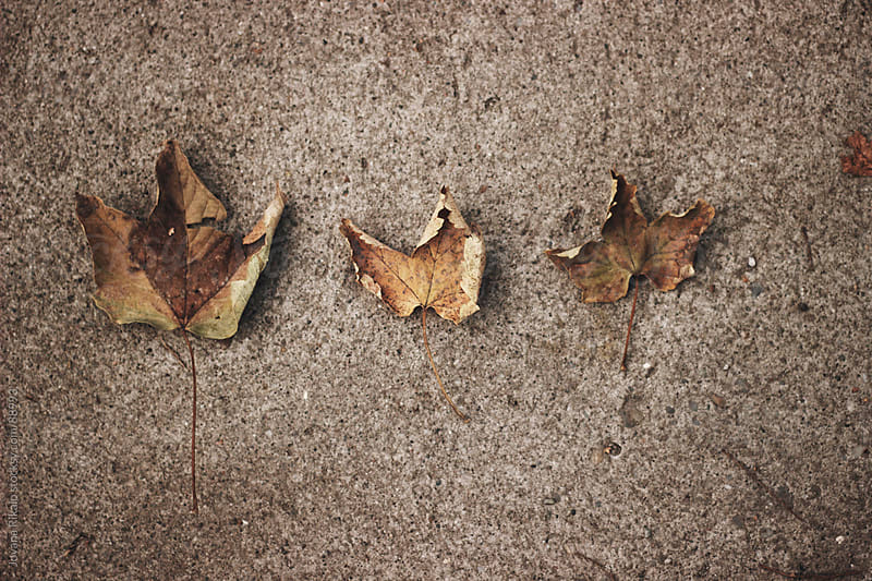 Leaves on concrete sorted by size by Jovana Rikalo for Stocksy United