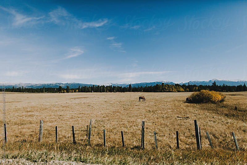 Horse in a field.  by Dylan M Howell Photography for Stocksy United