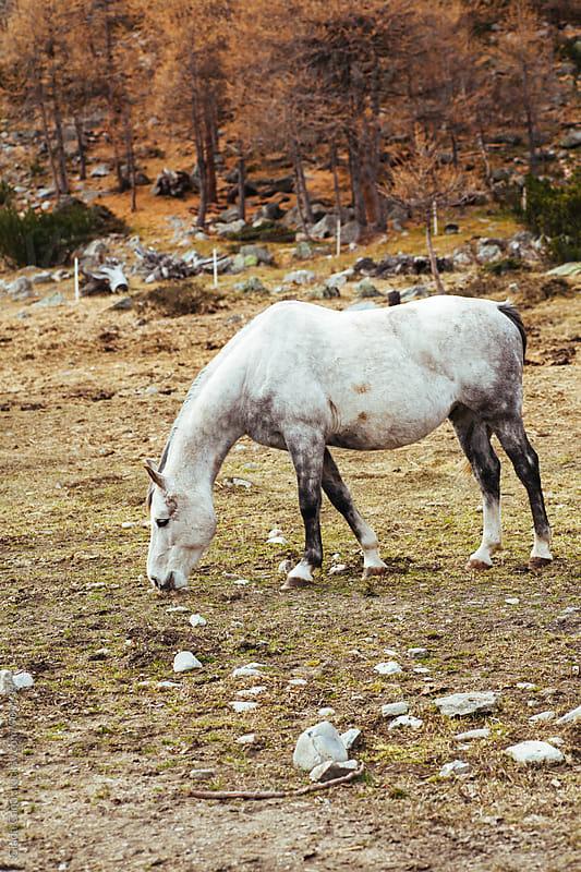 Wild horses by Giada Canu for Stocksy United