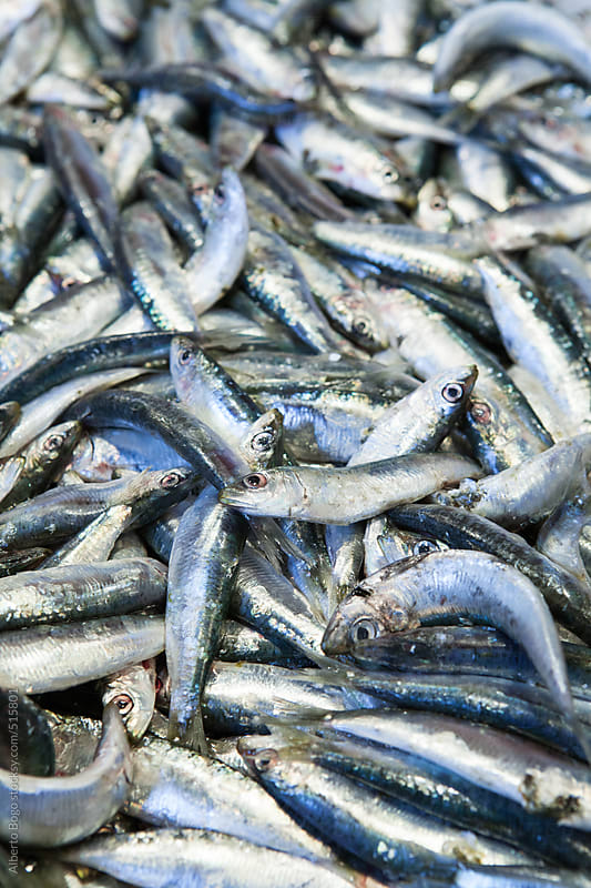 Sardines on the market by Alberto Bogo for Stocksy United