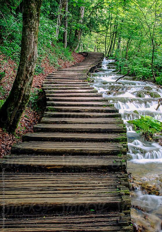 Plitvice Lakes National Park Croatia, Hrvatska by Raymond Forbes LLC for Stocksy United