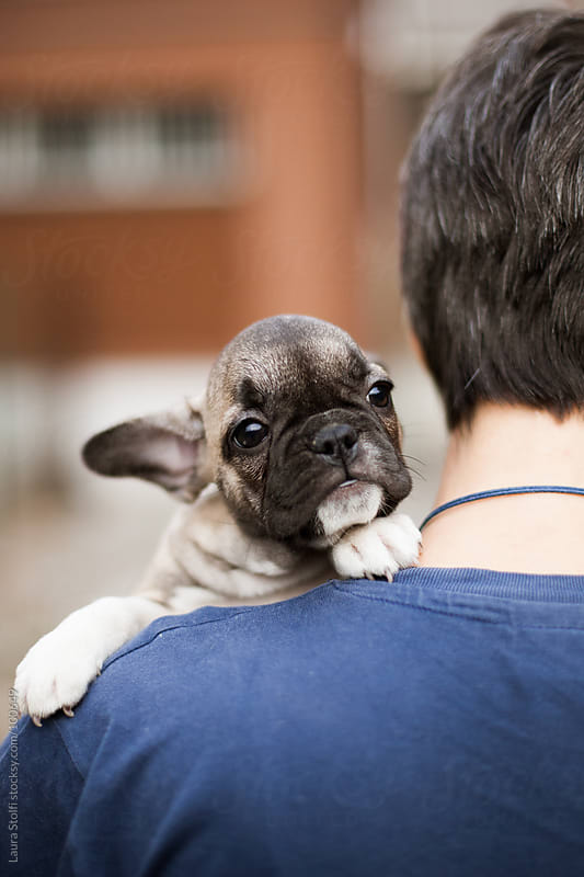 Woman seen from behind holds a French Bulldog pup in her arms by Laura Stolfi for Stocksy United