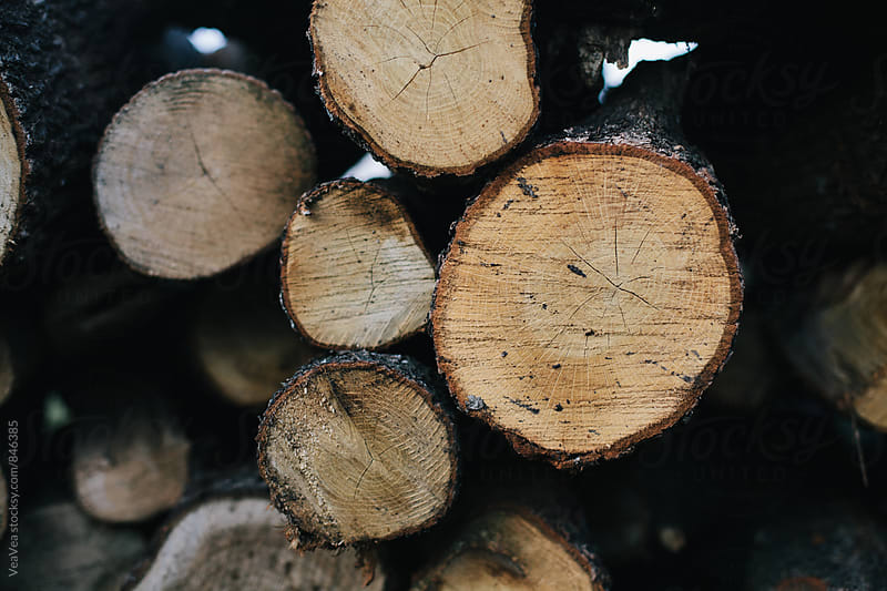 Logs  by VeaVea for Stocksy United